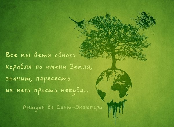 итоги развития лесного хозяйства:
