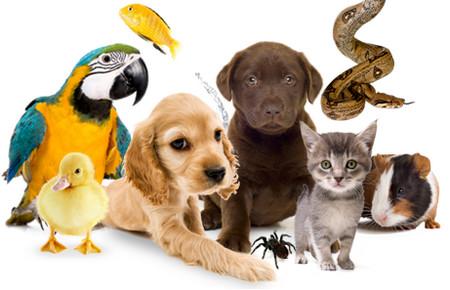 Картинки по запросу животные